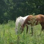 Les chevaux murmurent 013