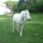 Les chevaux murmurent 012