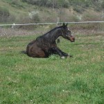 Les chevaux murmurent 011
