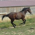 Les chevaux murmurent 007