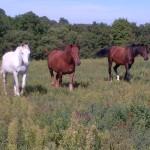 Les chevaux murmurent 002