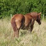 Les chevaux murmurent 017