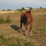 Les chevaux murmurent 016