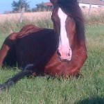 Les chevaux murmurent 006